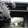 追手門と桜