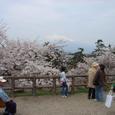 去年の桜と岩木山の図